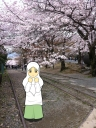 Nurul Ulfa | Background: Hanami in Kyoto